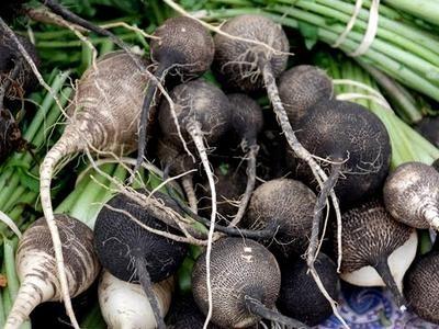 Редька черная огородная