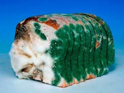 зеленый грибок на хлебобулочных продуктах