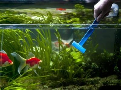 при частичной замене воды необходимо чистить стенки и грунт аквариума