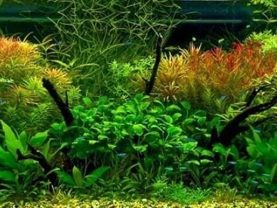 выбор водорослей для аквариума