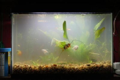 мутнеет вода в аквариуме
