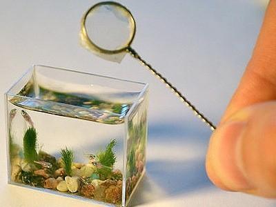 сачок для аквариума