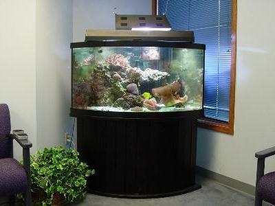 месторасположение аквариума