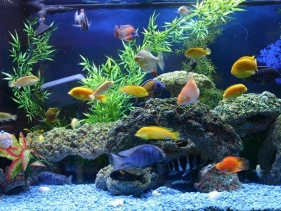 аквариумные растения обогащают воду кислородом