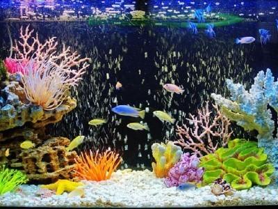 следует подобрать рыбок с одинаковыми потребностями