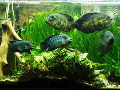 важно в аквариуме поддерживать постоянный уровень воды