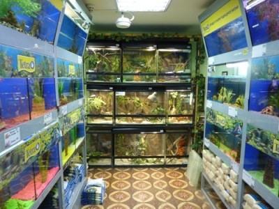 выбор аквариумных рыбок в магазине
