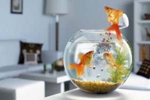 корм для рыбок