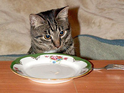 с 5 месяцев котёнок питается как взрослая кошка