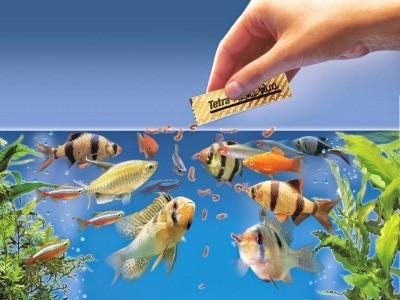 как кормить аквариумных рыбок