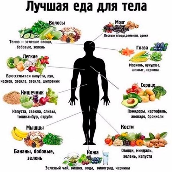 продукты и организм человека