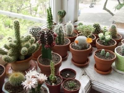 выбор места для зимнего сада в квартире