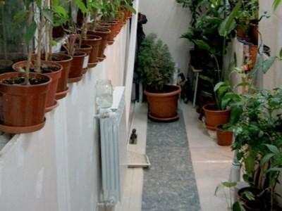 Фото: обогрев для зимнего сада