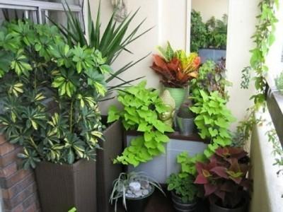 растения для зимнего сада нельзя подбирать бездумно и при этом стараться четко представлять себе желаемый результат