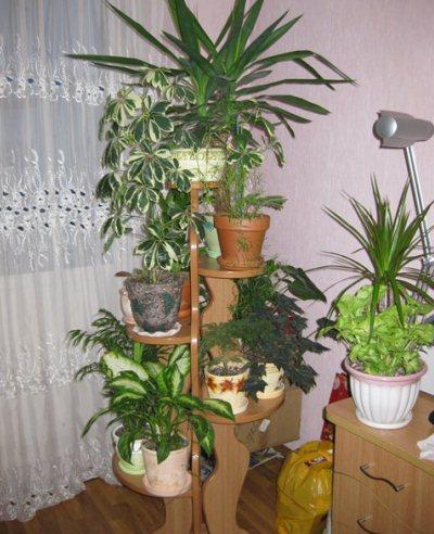 9выбор места для зимнего сада в квартире