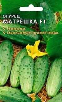 сорт огурцов Матрешка