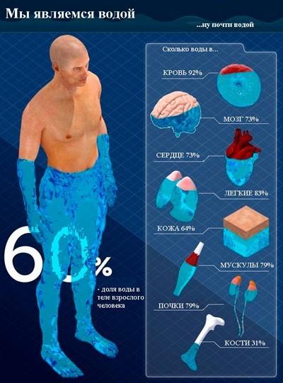 Водный баланс в организме человека