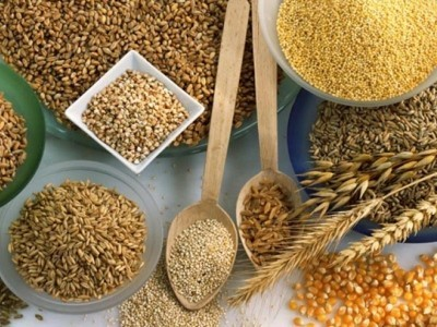 основные злаки – пшено, рис, пшеница, кукуруза, ячмень