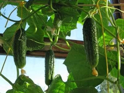 свежие овощи на подоконнике