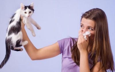 аллергия на кошек сильно отягчает жизнь человека