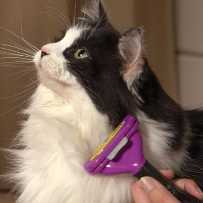 длинношёрстные кошки требуют ежедневного ухода