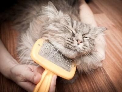 очень важно приручить кошку к грумингу