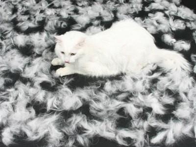 в период линьки у кошки обновляется шерсть