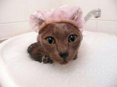 купание кошки избавит животное от грязи и старой шерсти