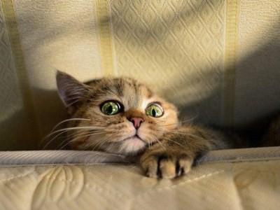 стрижка кошек приносит больше вреда, чем пользы