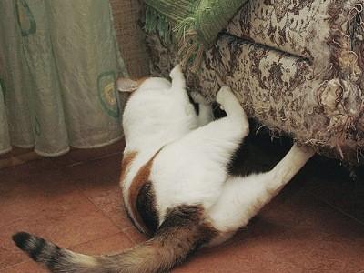 уделяйте особое внимание состоянию когтей кошки