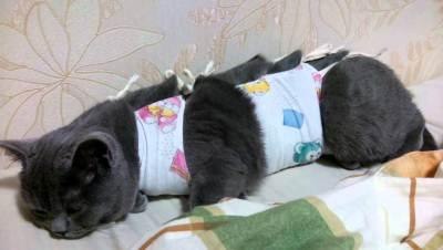 после стерилизации кошке необходим покой