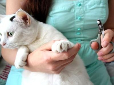 маникюр кошке можно сделать самостоятельно