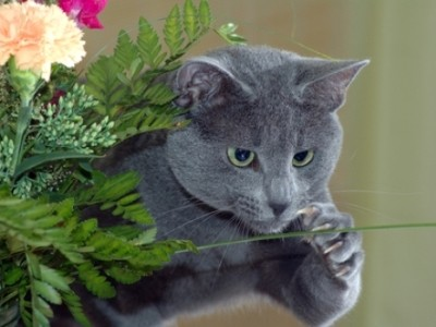в рацион кошки должны входить мясо, овощи, злаки, трава и молочные продукты