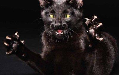хозяин должен показать кошке, где можно точить когти