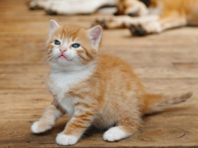 в двухмесячном возрасте кошечки и котики становятся разными