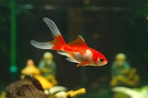 Как менять воду в аквариуме с рыбками