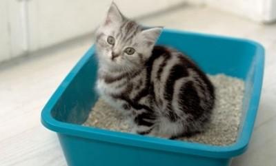 котят нужно знакомить с туалетом, когда он отходит от мамы