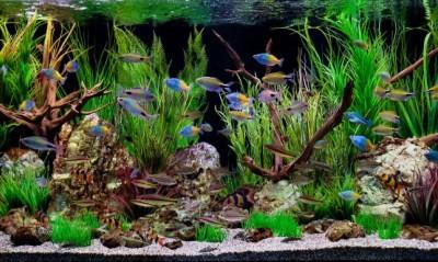 у аквариумистов-любителей часто возникают трудности с заменой воды