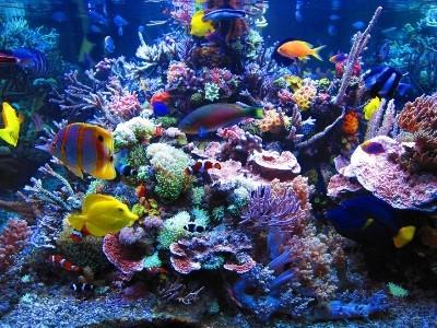 для морского аквариума очень сложно подобрать подходящую по солёности воду