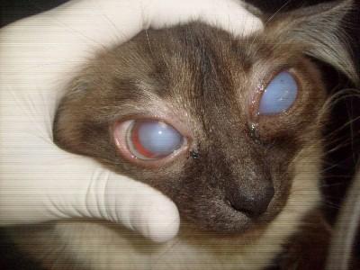 глаукома характеризуется очень высоким давлением