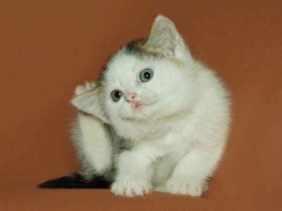 котята очень уязвимы атакам клещей