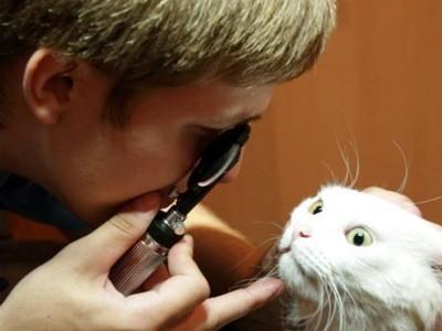 начинать лечение глаз можно только после осмотра офтальмолога