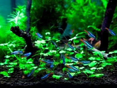 регулярная неполная смена воды - залог благополучия биосистемы аквариума