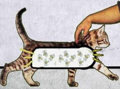некоторые теории о кошачьем мурчании не очень научны