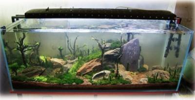 в открытых аквариумах вода испаряется гораздо быстрее, поэтому её нужно чаще добавлять