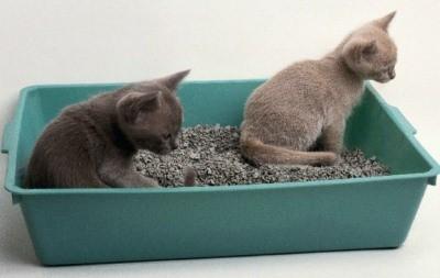 лоточки с наполнителями нравятся большинству кошек, в них удобно копать