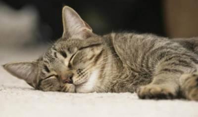 с возрастом потребность в сне у кошек увеличивается