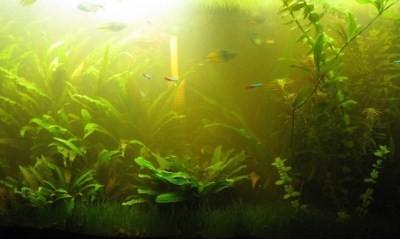 запах тухлятины или тины свидетельствует о явной проблеме внутри аквариума