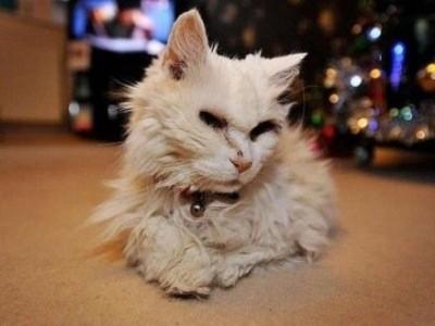 кошка Люси в 39 лет поставила рекорд по долгожительству