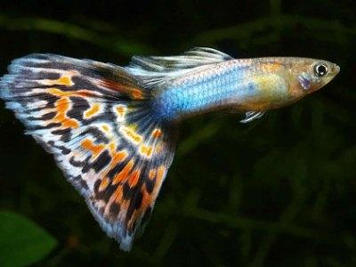 маленьких рыбок может легко затянуть сифоном вместе с грязной водой